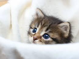 kätzchen.jpg